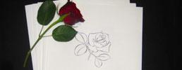 Salme-/sanghæfter med rose